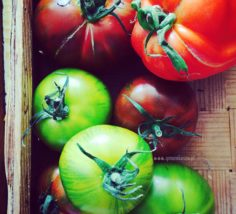 pomidory_1